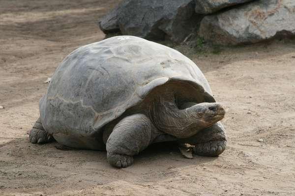 Секрет долголетия черепах