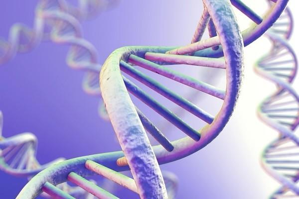 Генная инженерия скоро станет главным эволюционным рычагом