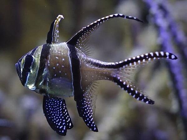 Самые красивые обитатели морских глубин. 3304.jpeg