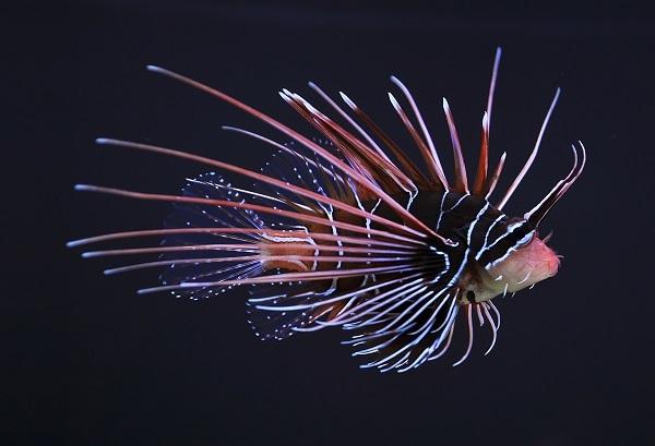 Самые красивые обитатели морских глубин. 3306.jpeg