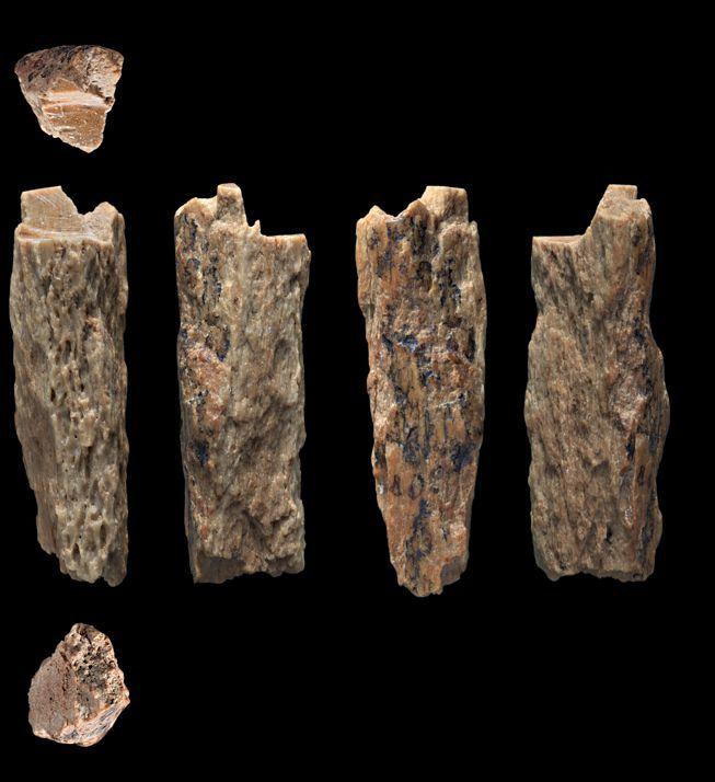 90 000-летняя девочка была древним человеческим гибридом. 2351.jpeg