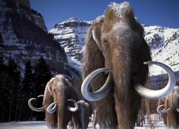 Эксперты выявили, когда и где вымерли последние шерстистые мамонты