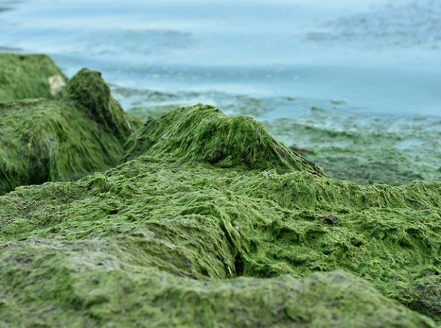 Древние растения: как менялись деревья и травы за миллионы лет?. 2749.jpeg