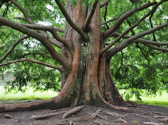 Древние растения: как менялись деревья и травы за миллионы лет?. 2752.jpeg