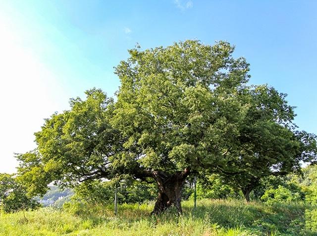 Древние растения: как менялись деревья и травы за миллионы лет?. 2755.jpeg