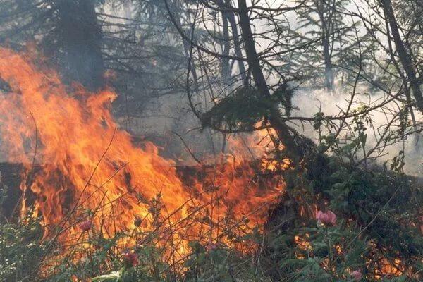 Уровень пожарной опасности в Хакасии увеличивается