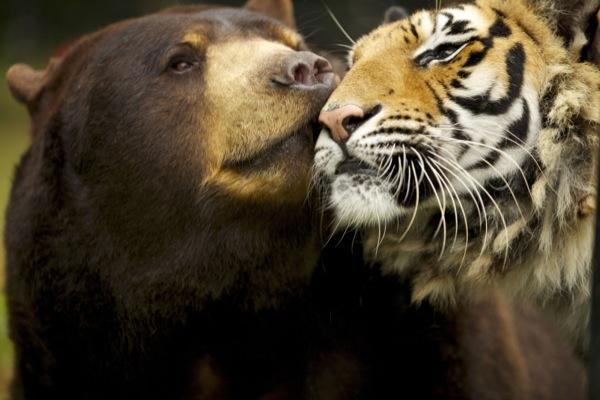 Удивительные суперчувства животных. Слух и обоняние
