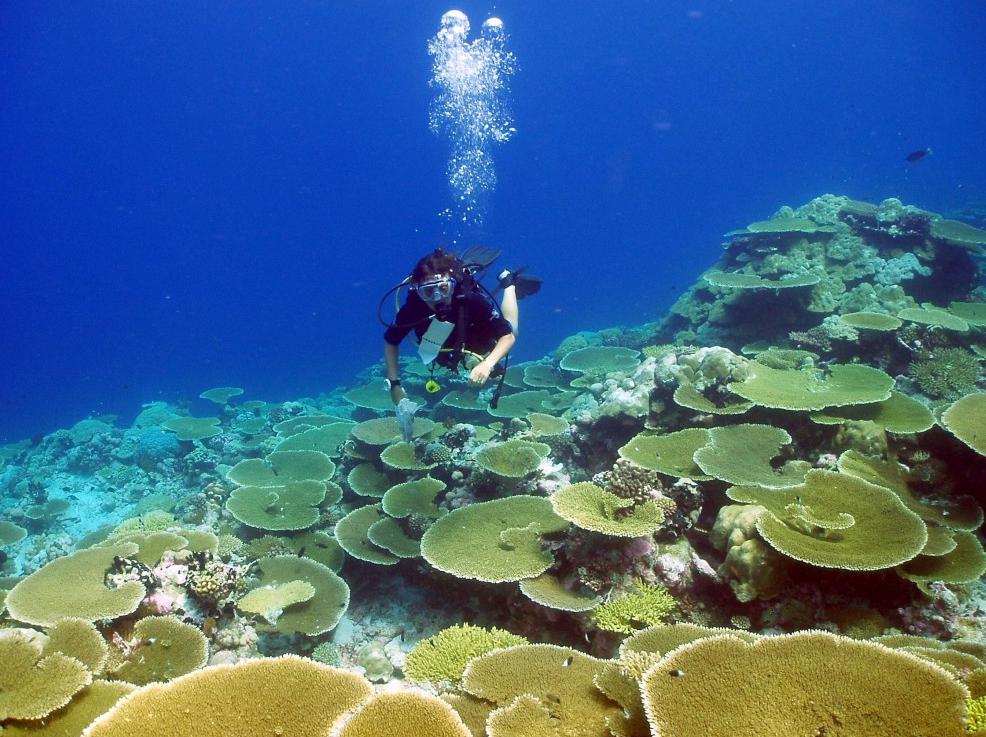 Самые загадочные места в Мировом океане (продолжение). 2966.png
