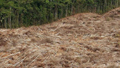 Расширение площади сельскохозяйственных угодий и пастбищ приведет к сокращению производства сельского хозяйства и животноводства