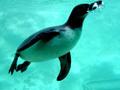 Рожденному плавать, летать не суждено…