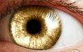Глазной имплантат помог восстановить зрение приматам