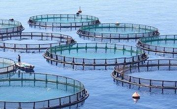 Российские ученые научат африканцев разводить рыбу