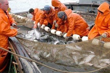 Главные вопросы о рыболовстве в экологическом ключе