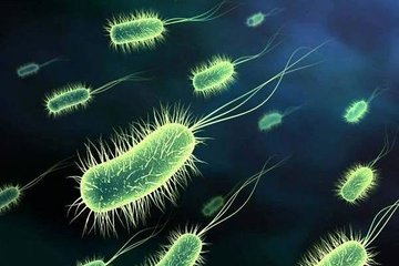 Выявлено огромное разнообразие океанических микробов - протистов